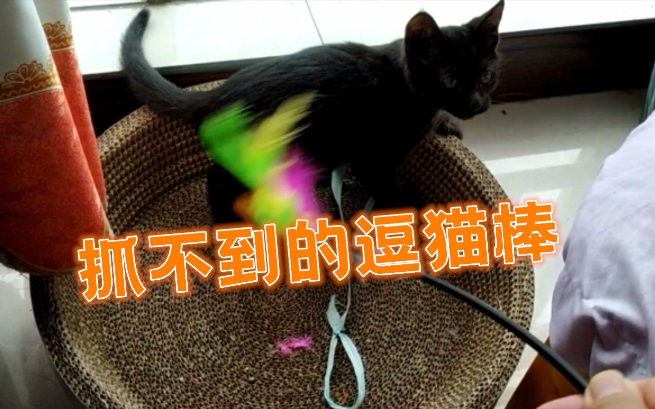 【煤球vlog2】抓不到的逗猫棒