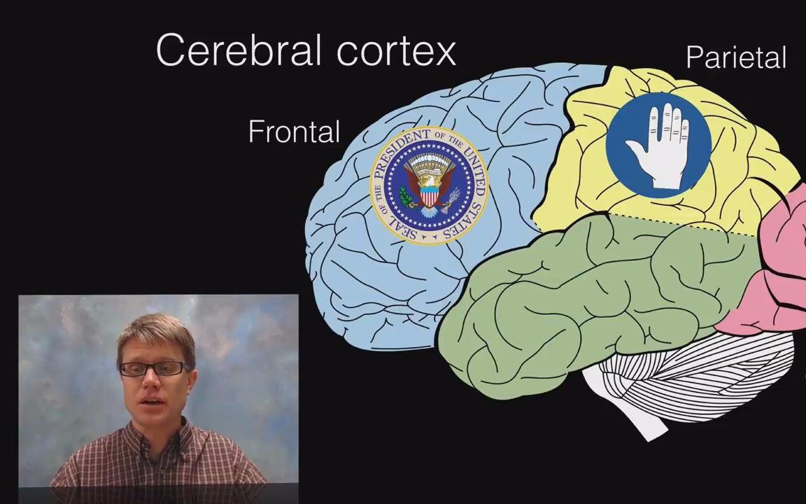 【大脑】大脑的十七个功能分区和结构,你知道几个?图片