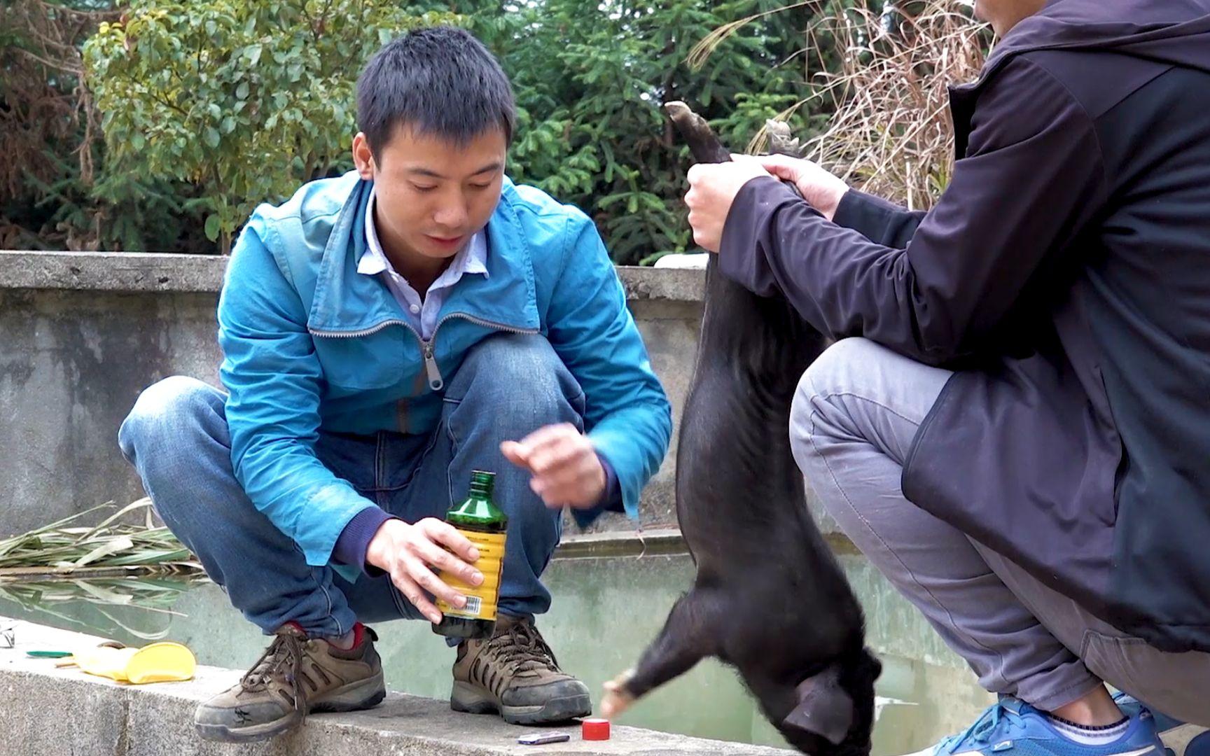 华农兄弟:狗子又生了12只小崽,带大家看一下,顺便抓只小公猪阉掉