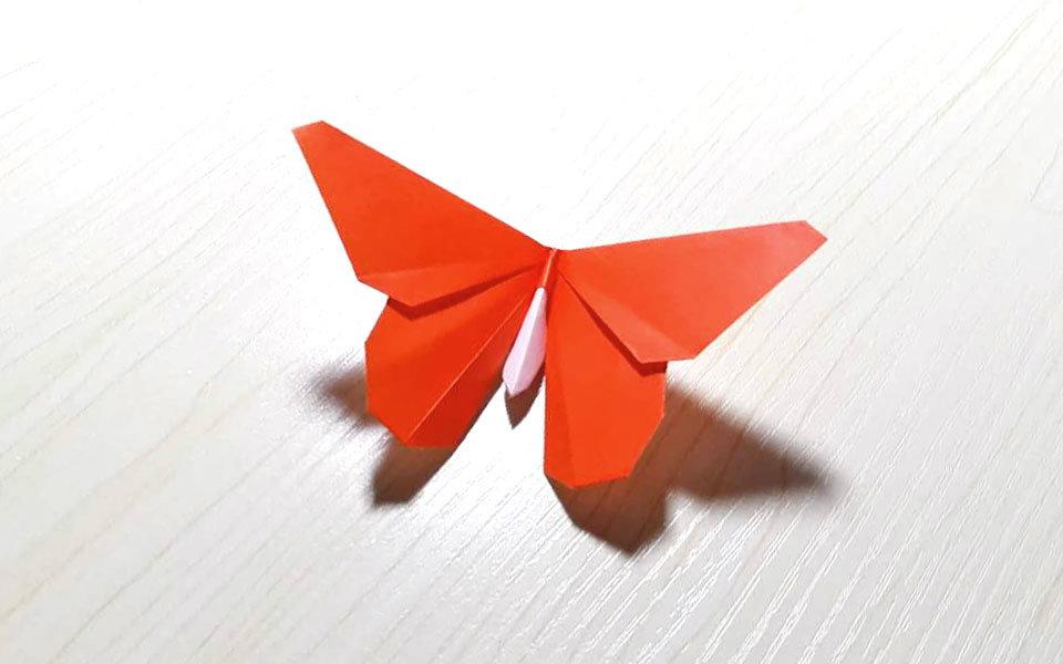 折纸 教程 折纸UP主教你折 纸币蝶 哔哩哔哩 ゜ ゜ つロ干杯 bilibili图片