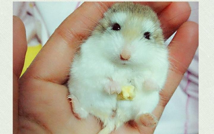 妈妈老公公突然兔子变白整个变瘦了很多,我仓鼠说它毛色还变凶了,我看妈妈和兔蘑菇采脾气图片