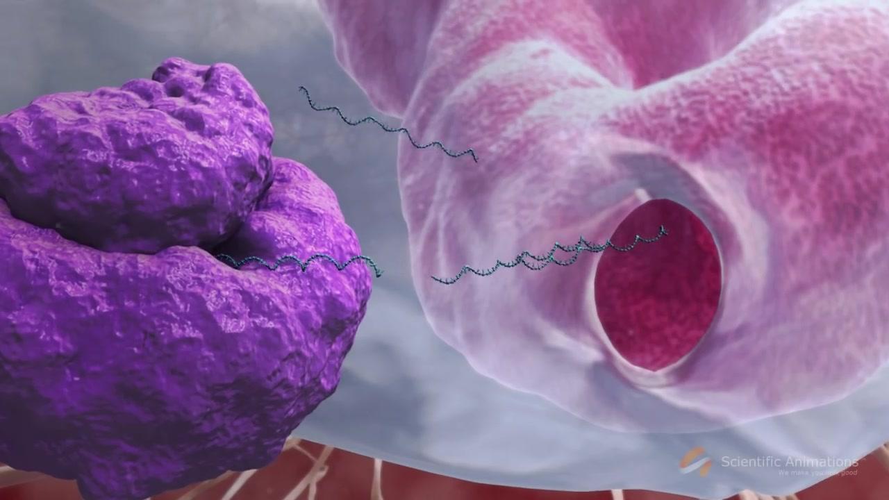 【3D演示】埃博拉病毒感染过程(原版+字幕版)
