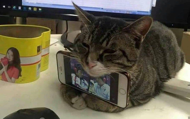 猫:我特喵的爱不爱你 自己心里没点 b 数么?