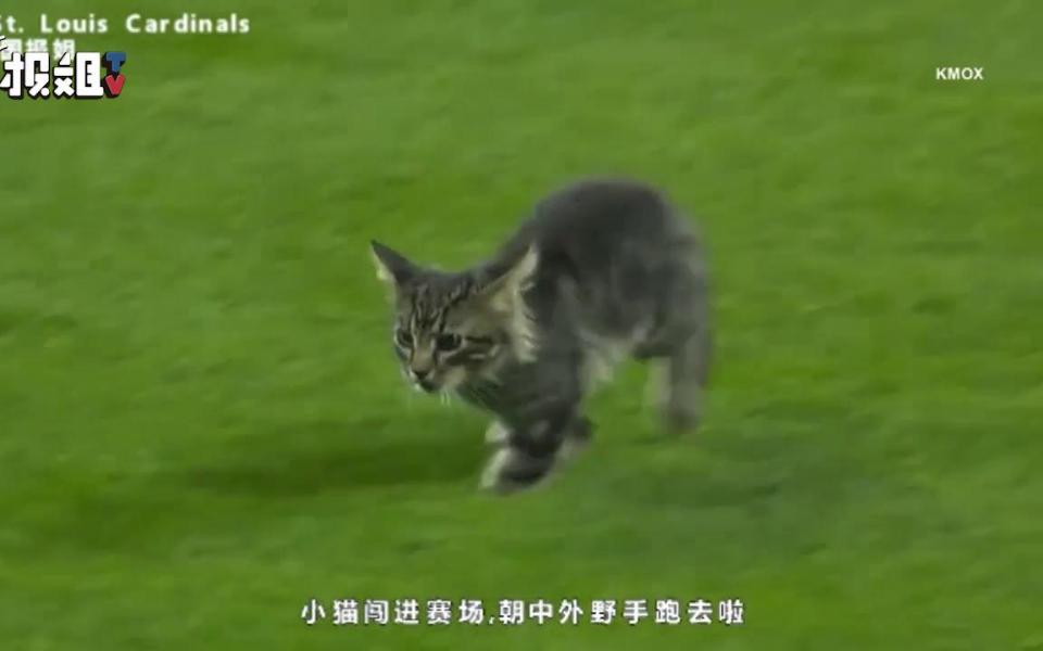 一只小猫误入赛场,观众们瞬间嗨了