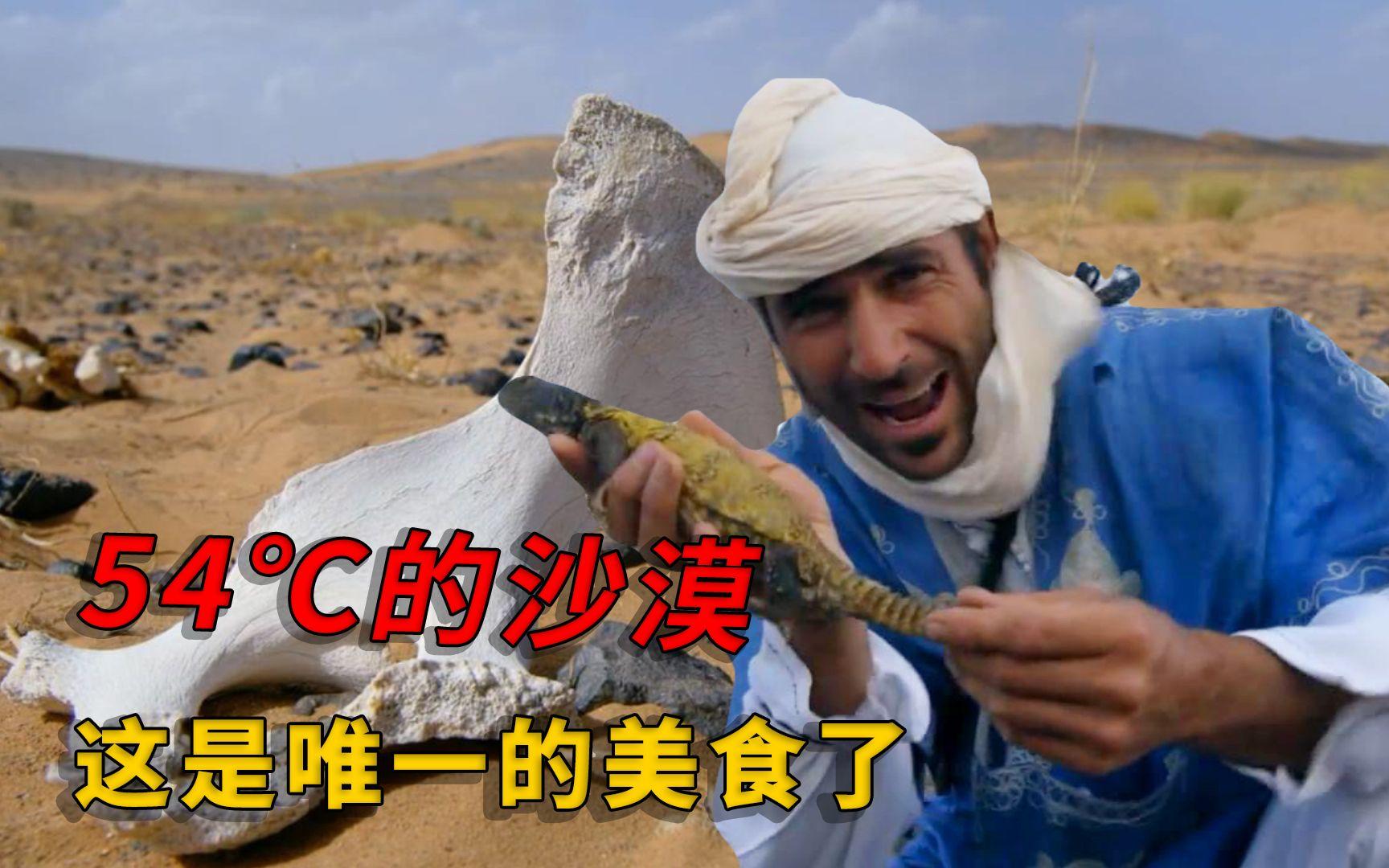 男子沙漠里生存5天,甲壳虫吃到想吐,能抓只蜥蜴简直开心得跳起