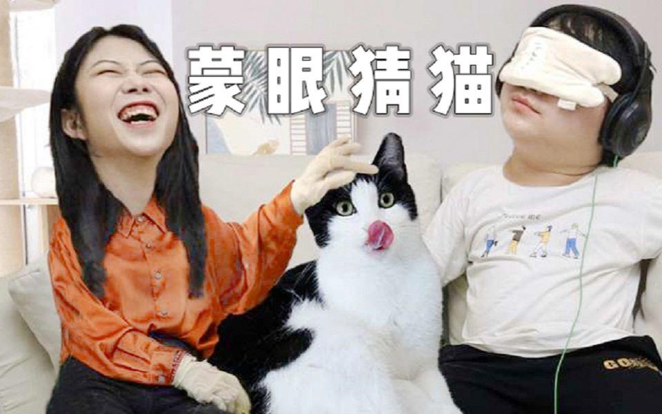 情侣玩蒙眼猜猫,5只猫就错3次,3年铲屎情破裂,猫:离了吧!