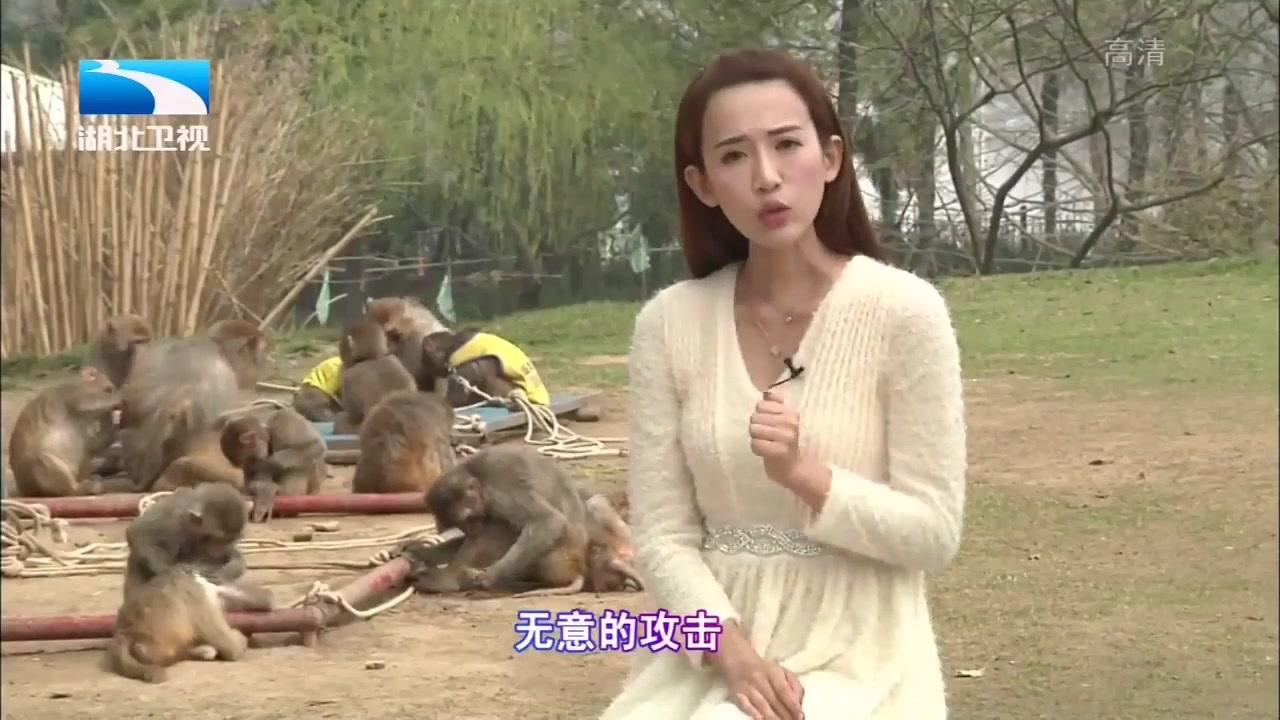 母亲在猴山给孩子换尿布,不料孩子睾丸被猴子抓掉!