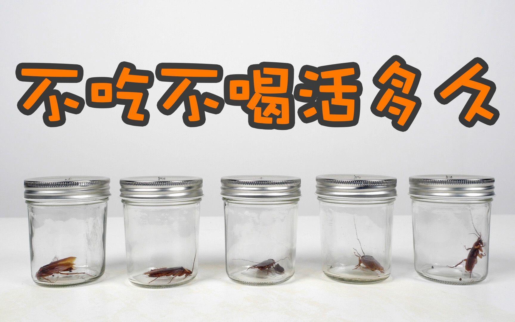 实验:蟑螂不吃不喝能活多少天?结果可能远超你的想象