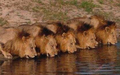 坏男孩雄狮联盟_坏男孩雄狮联盟6兄弟吼叫