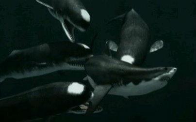 巨齿鲨 vs 长野鲸图片