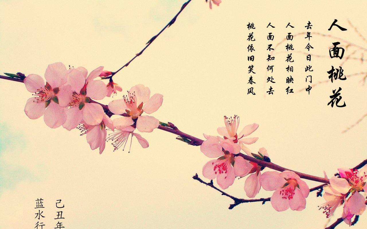 【洛天依】人面桃花【墨明棋妙古风曲补完计划bp:17】图片