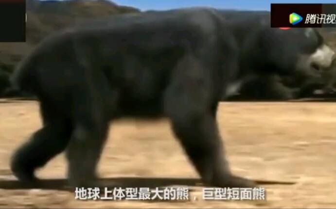 婆 55 熊