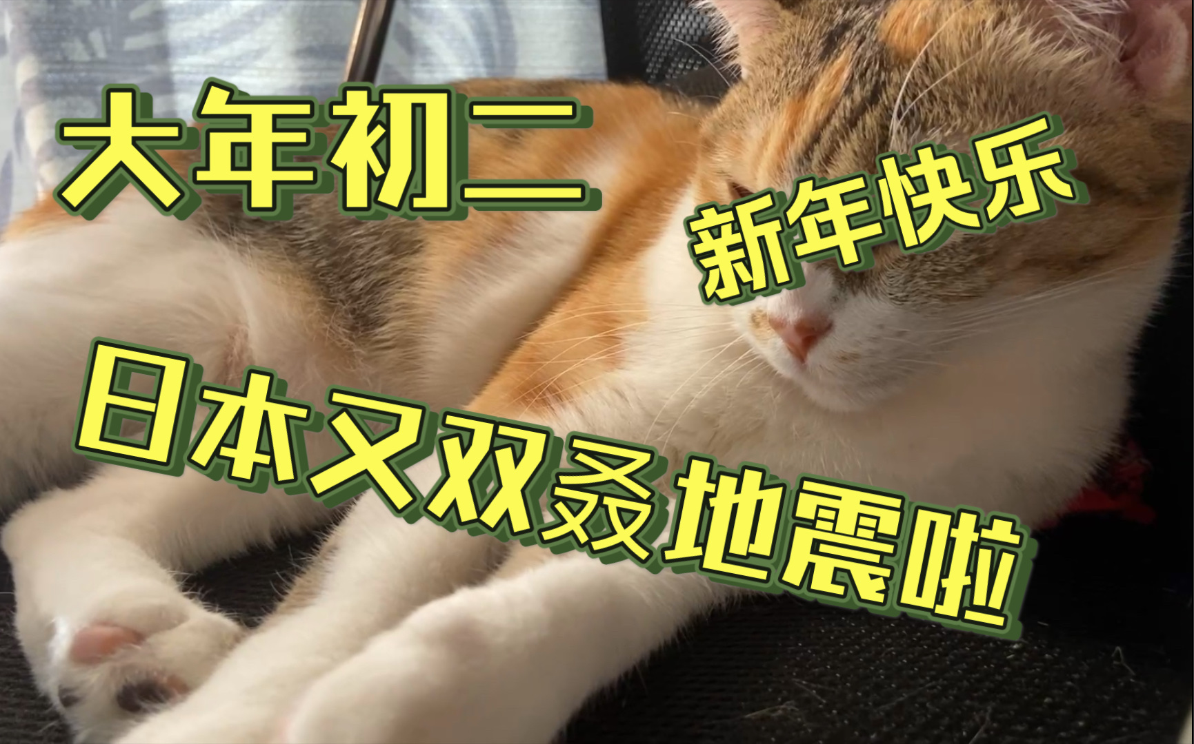 猫 地震 地震前,猫猫狗狗会有什么特殊的反应?_行为