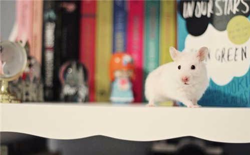 【家有鼠片】不得了啦 越狱了 怼怼大佬越狱啦啦啦图片
