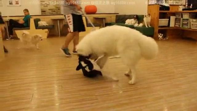AG亚游集团ag96888美女宠物店第一天工作实录