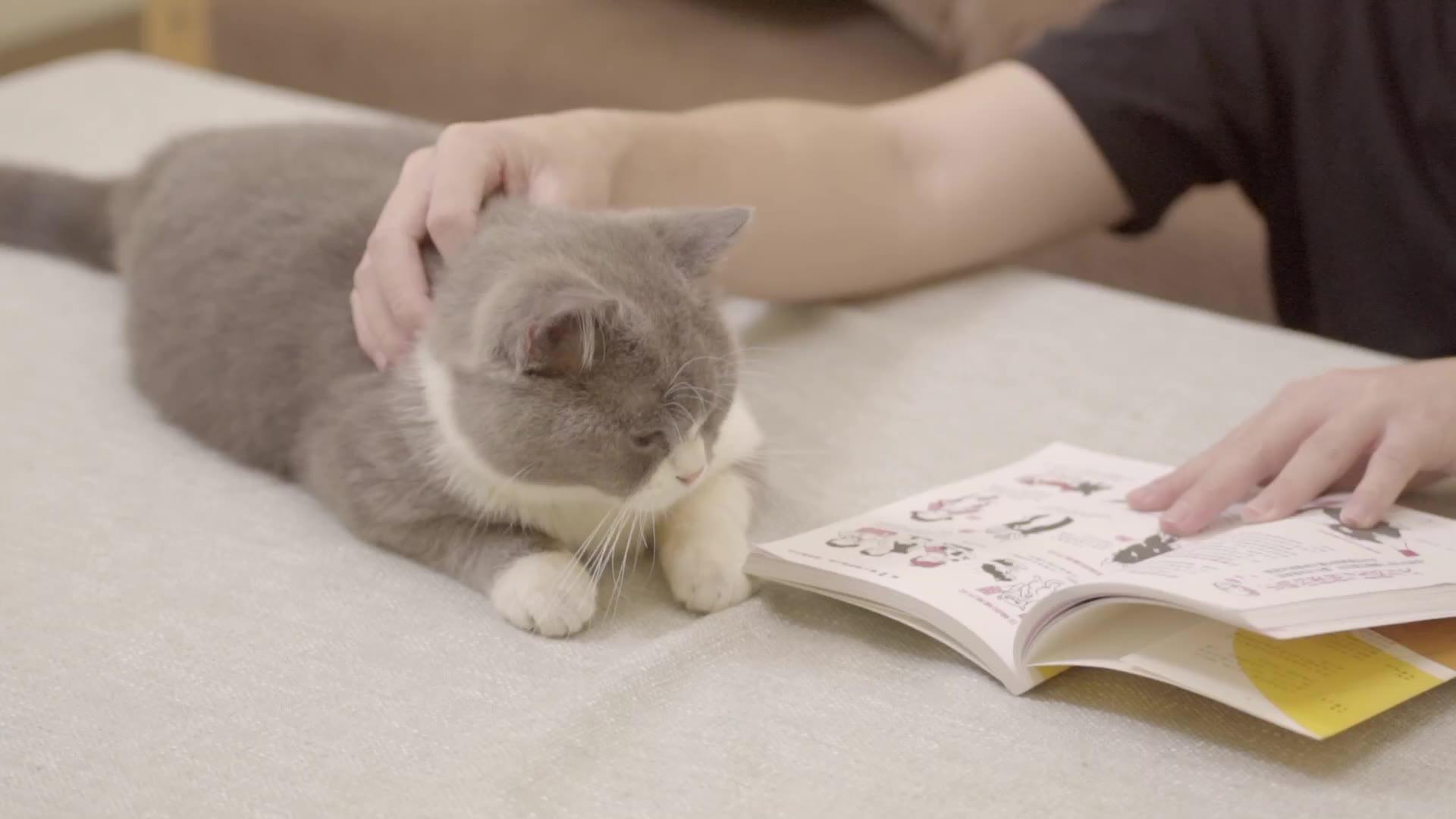 给猫咪按摩的三个招式,包你主子酥糊的不要不要的!
