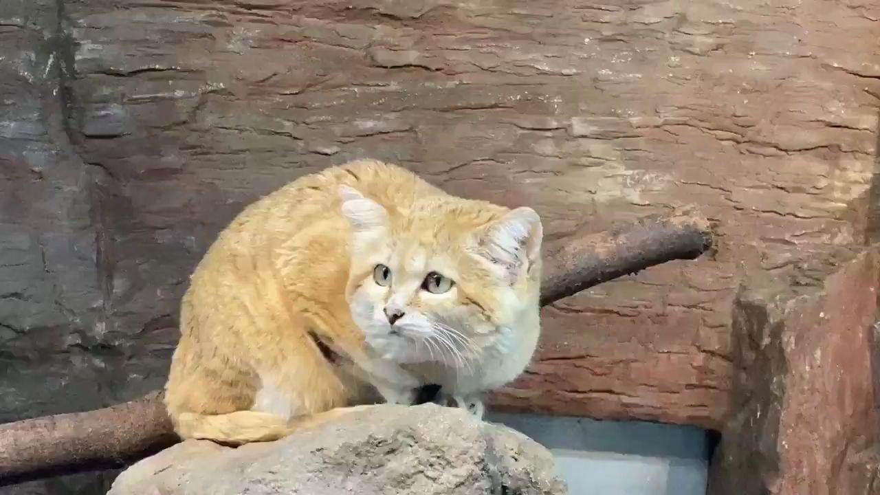 【沙丘猫】靠,挖地道逃跑被发现了