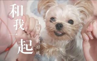 【约克夏DD】发明跟小狗玩的新游戏!结果小狗...[2020评测][视频]