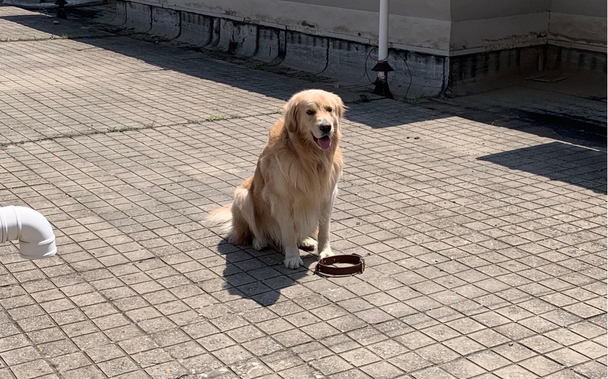 我终于凭一己之力失去了狗子对我的信任虽然我不是人,但你是真的狗