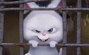 女装店货架摆�_【正片】《爱宠大机密》兔老大蠢萌合集 都在这里啦 萌shi你