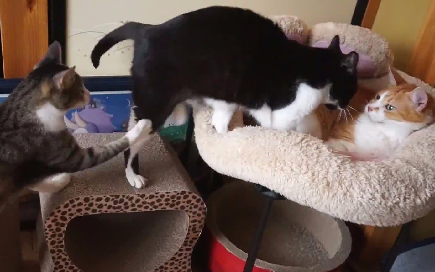 电脑壁纸动物猫ku