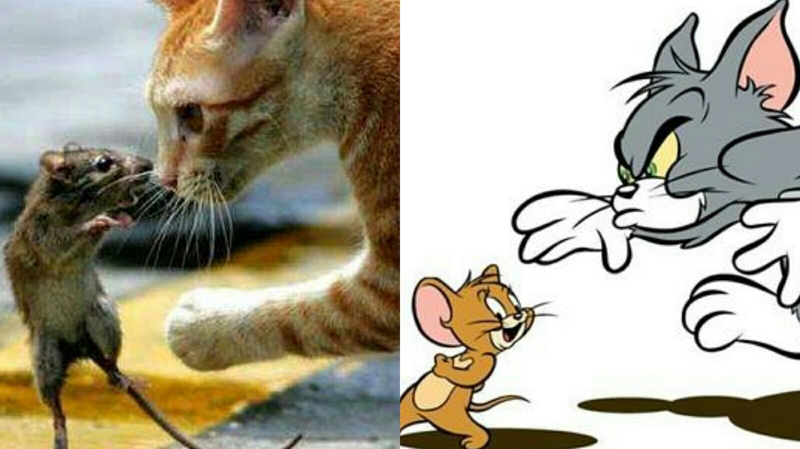 现实里的猫和老鼠,汤姆诚不欺我