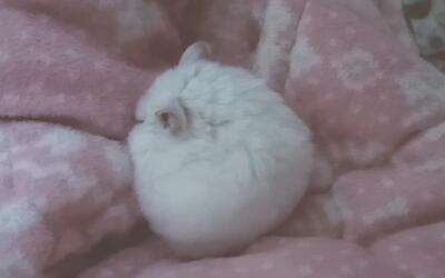 当仓鼠在你身上睡着时,心都被萌化了中班海豚聪明的科学图片
