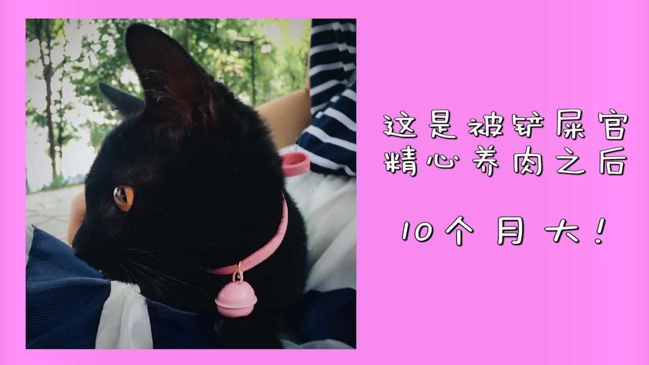 来至一个中华田园少女喵的祝福