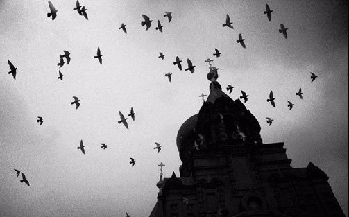 宋冬野鸽子的意思_鸽子——宋冬野