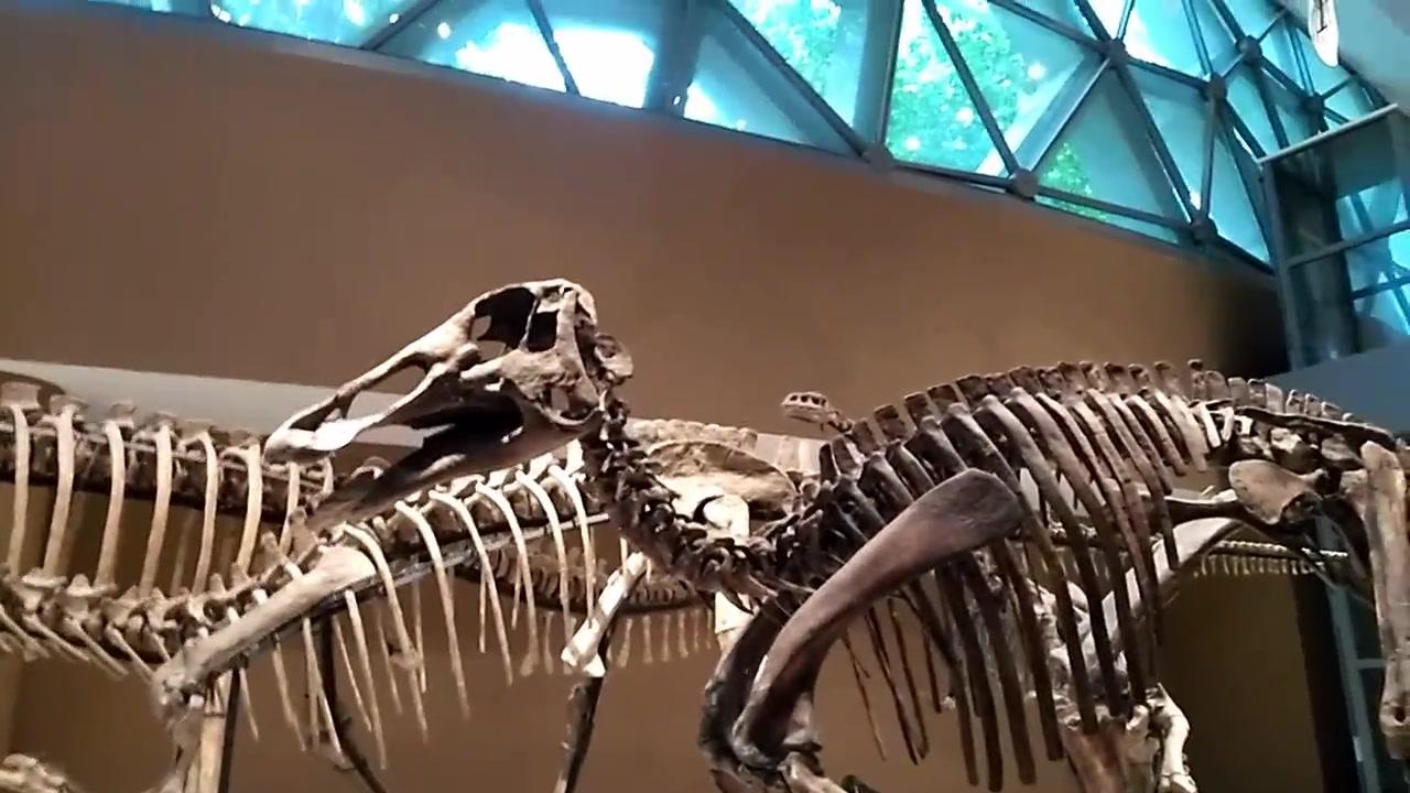 上海自然博物馆恐龙展厅讲解01