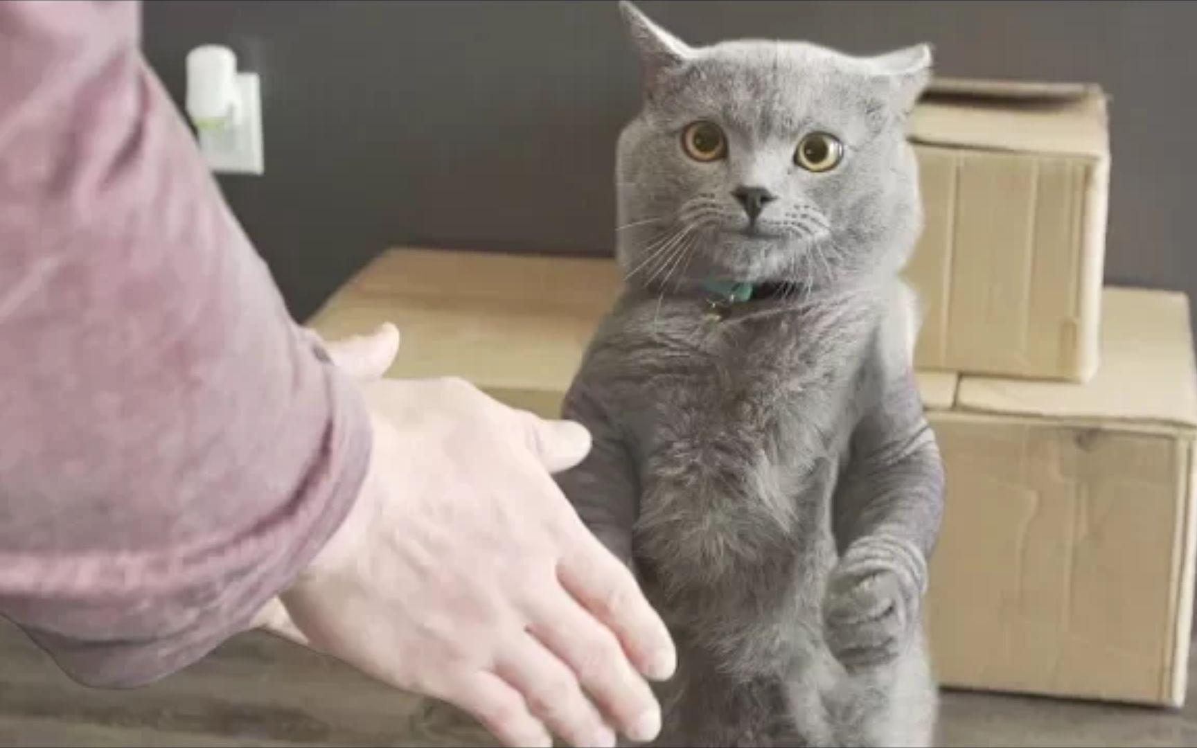 猫咪视频_谁有猫咪视频播放器还是有类似的视频播放器.