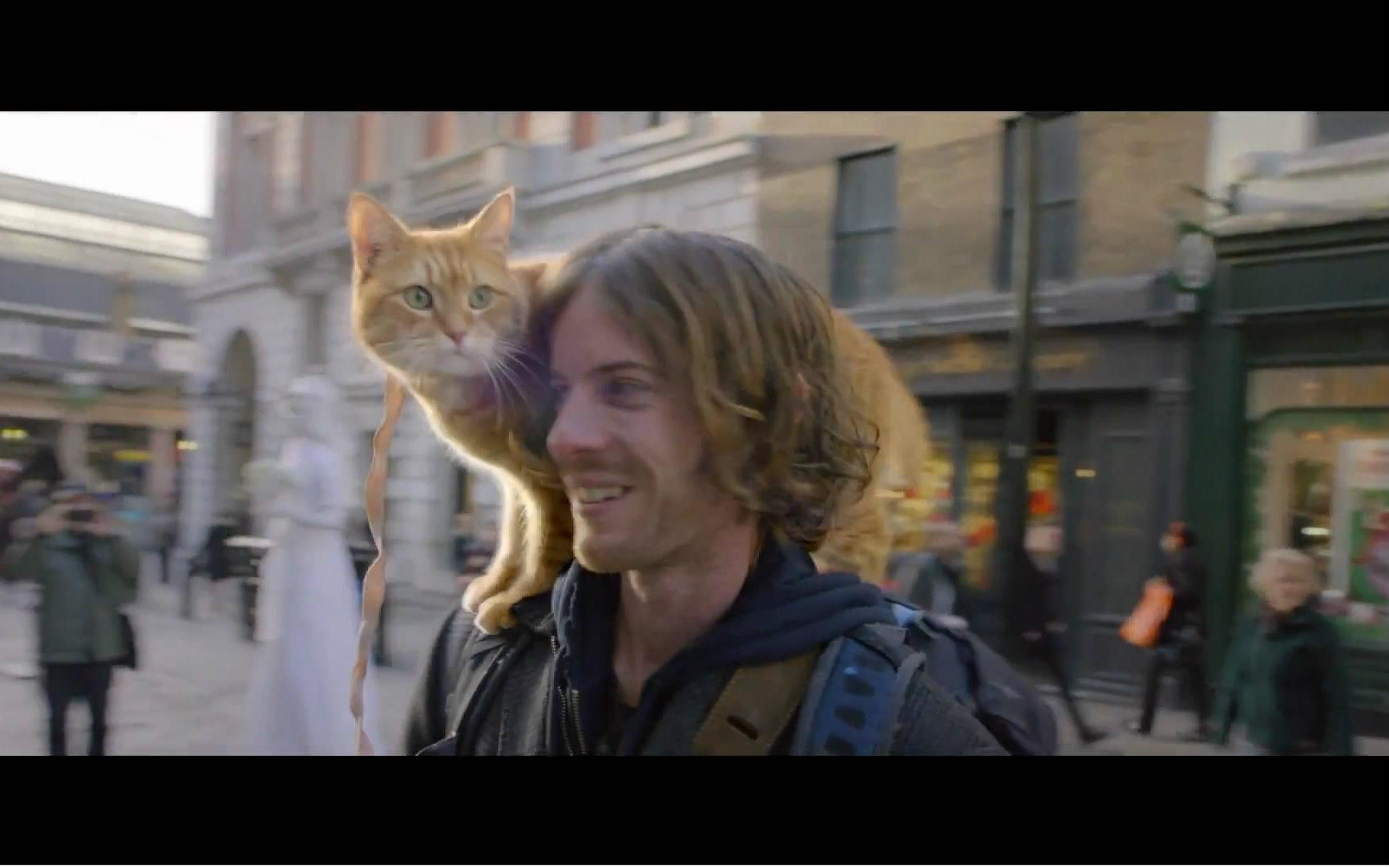 萌宠tv_【萌宠感人】《一只名叫鲍勃的流浪猫》预告片中文字幕 [影探-16 ...