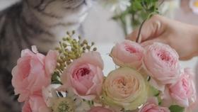日本花艺师shiki粉嫩色系花艺作品教程视频 花束插花创作arrangement For Summer 哔哩哔哩 つロ干杯 Bilibili