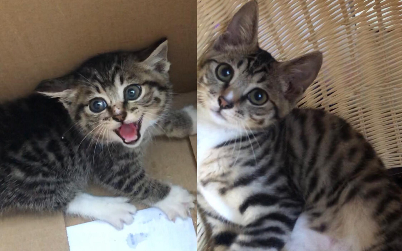 狸窝_捡猫两个多月了,菜市场超凶小野猫变成一个人的小嗲精,娇娇