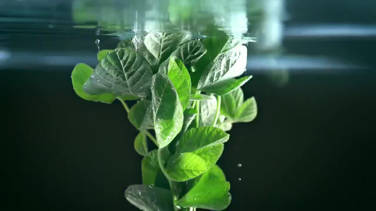 央视广告欣赏-维他奶钙思宝高钙植物奶-2