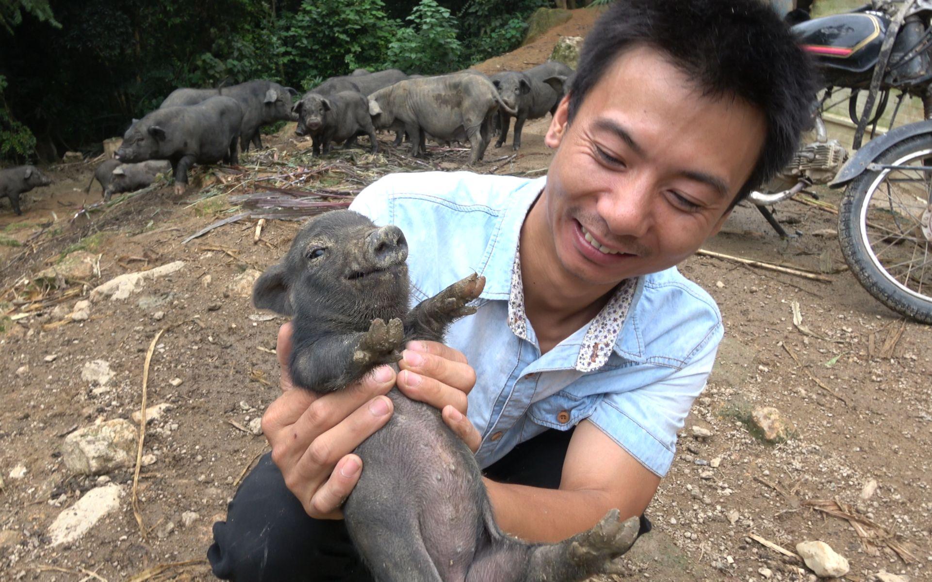 羊吃猪奶视频_华农兄弟:去看下兄弟家散养的香猪,捉来做烤乳猪,应该很 ...