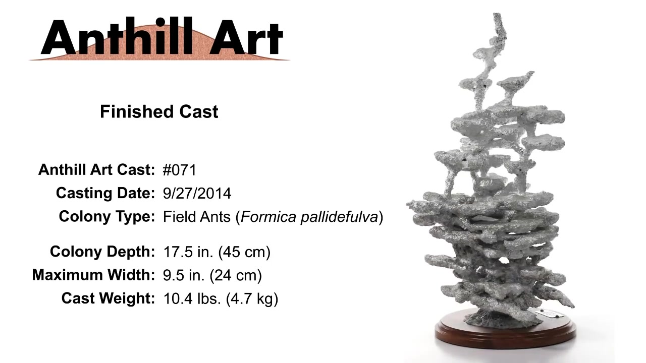 Anthill Art】熔铝浇铸蚁巢_哔哩哔哩(゜-゜)つロ干杯~-bilibili
