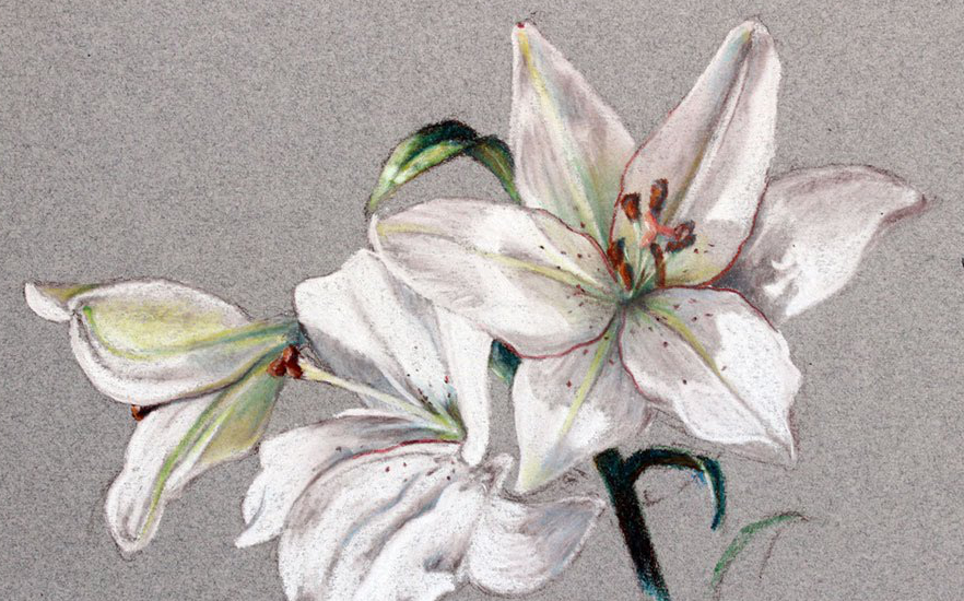 【绘画技巧】植物静物的描绘(彩铅)