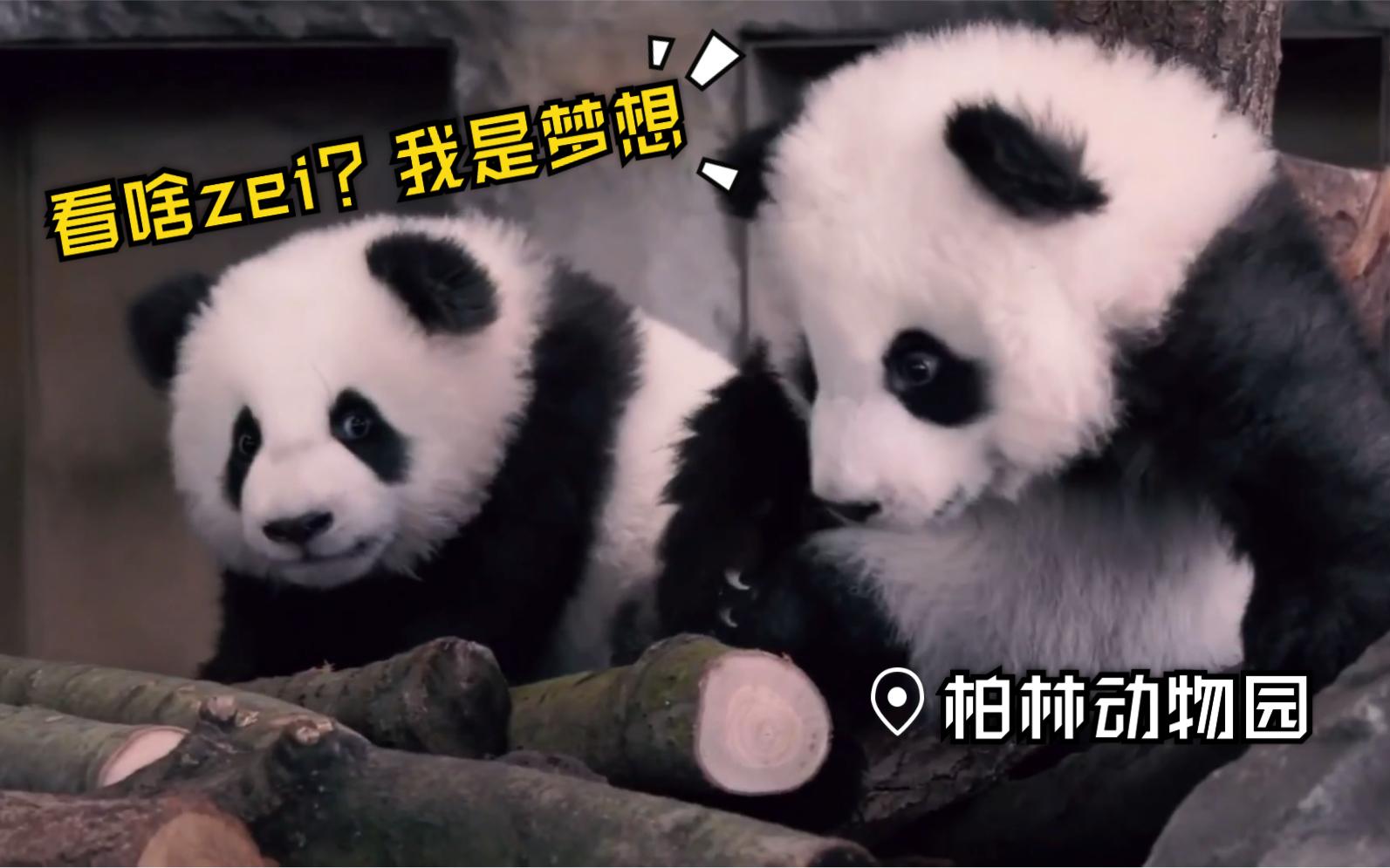 avtt天堂人与动物_【大熊猫】【完整版】梦想梦圆出道啦~欢迎来柏林动物园看我 ...