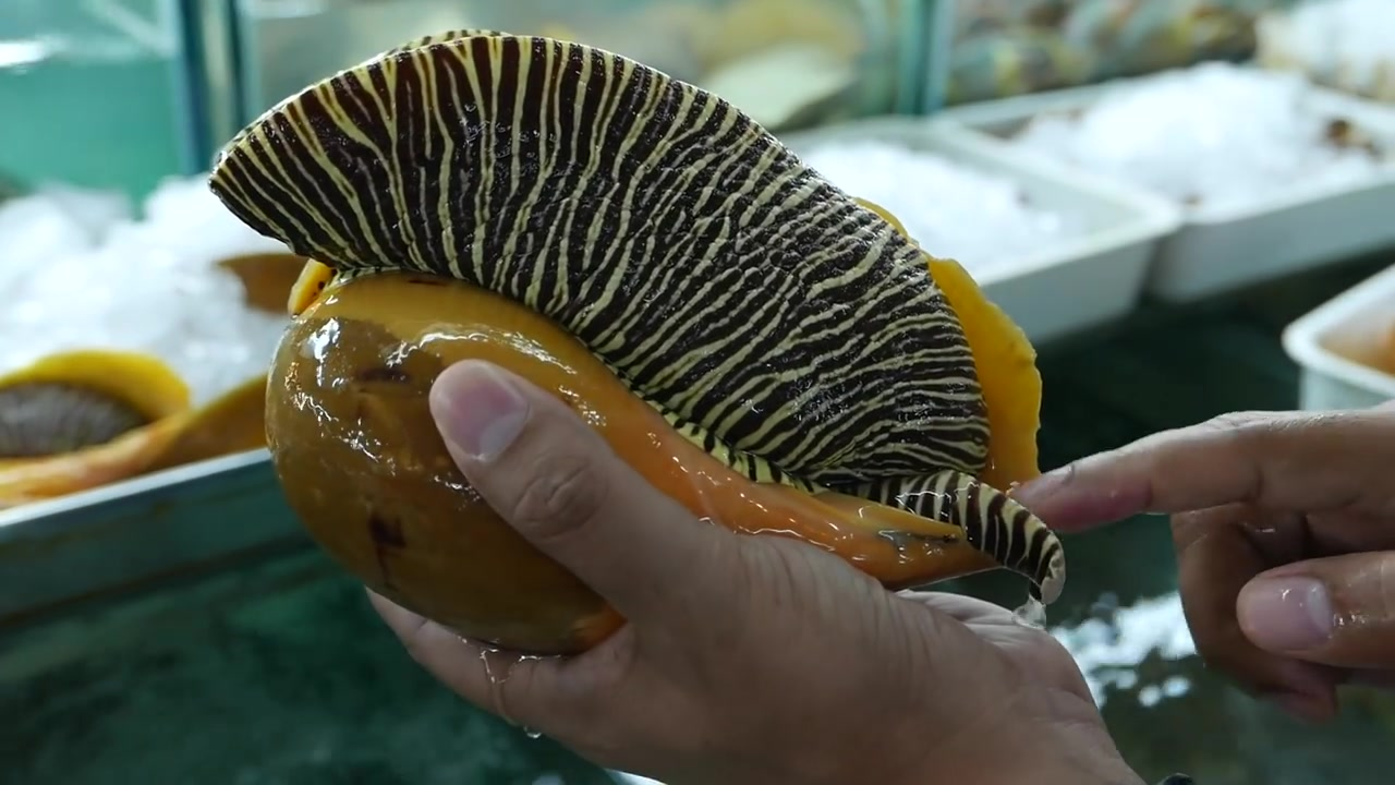 巨型食人鱼图片_巨型海蜗牛_巨型食人鱼_巨型蝠鲼_巨型蜈蚣 - www.7xsoft.com