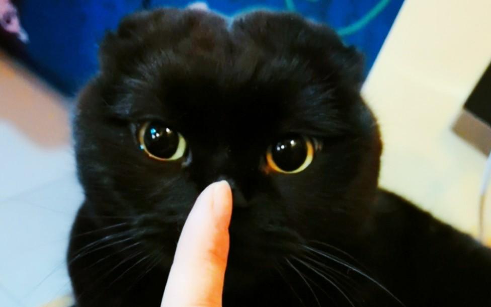 作為一只咬人的小貓咪,你已經很可愛啦!