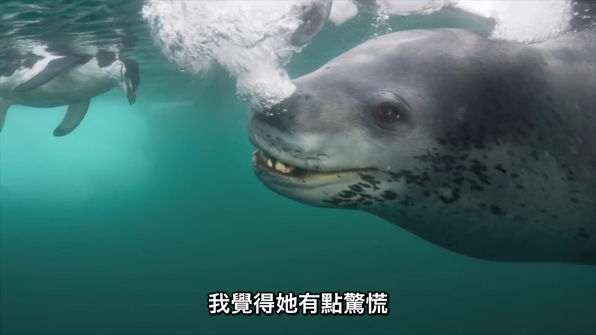 妈妈的大肚子视频_海豹怕摄影师会饿死,结果不断捉企鹅给他吃(中文字幕)_哔哩 ...