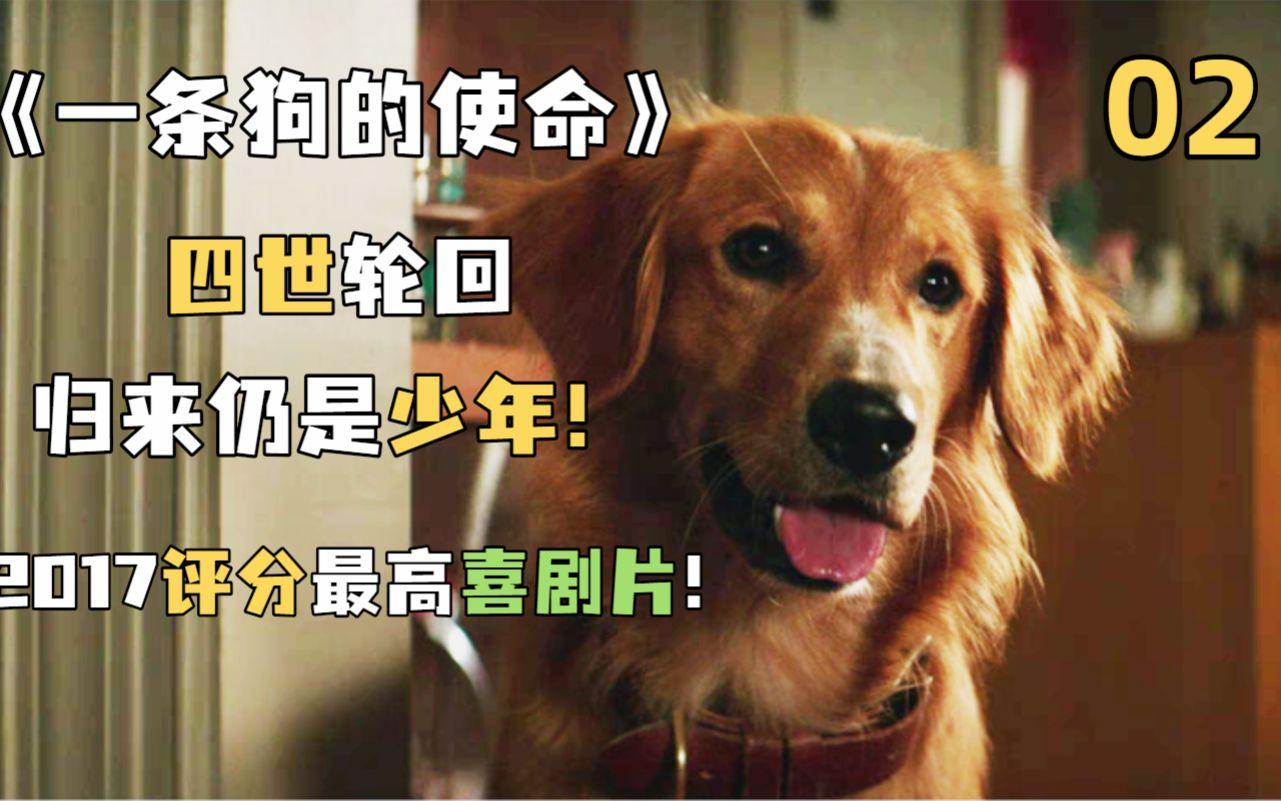 狗狗用四世的寻找,诠释对主人的忠诚挚爱!《一条狗的使命》2
