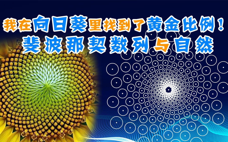 数学中的黄金分割_我在向日葵里找到了黄金比例!斐波那契数列与自然_哔哩哔哩 ...