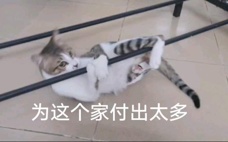 【吸猫】没什么才艺只能给大家表演个钢管舞,